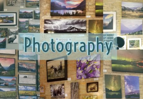 Photography-Sassafras